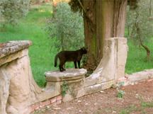 Pamela-cat