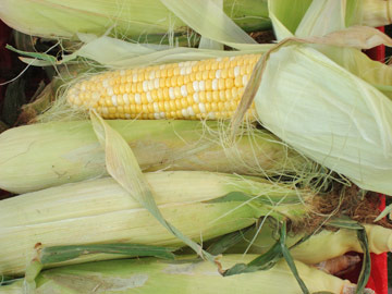 Fresh New Mexico corn