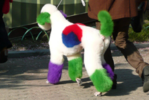 Not the same dog, but a similar green