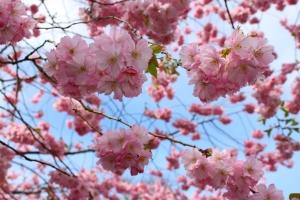 memoir-spring