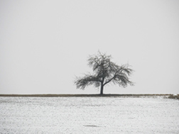winter-tree, memoir