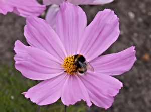 memoir-spring-flower