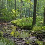 Deep-Woods-Stream_5699